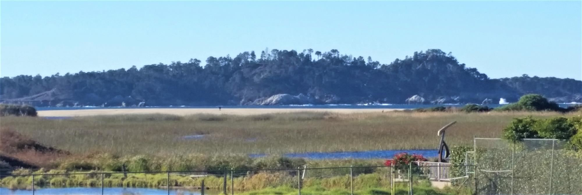 An image of Point Lobos seen across the marsh from the point of view of River School's lower field.